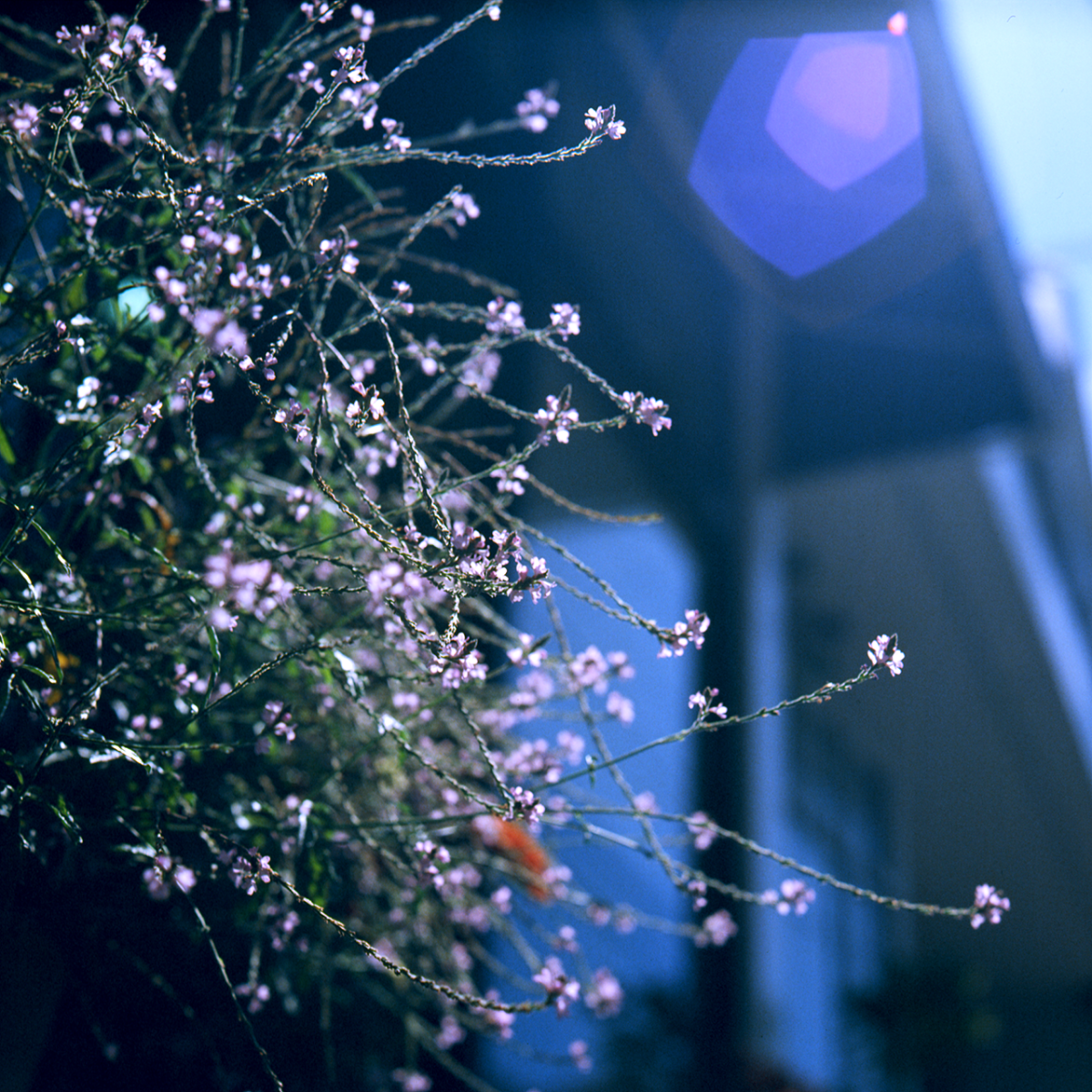 Kodak Ektachrome 64/EPR 現像結果